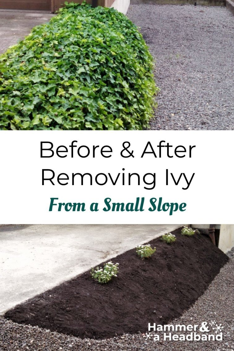 Before and after removing ivy from a small slope