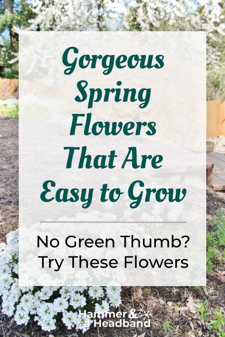 Gorgeous easy-care spring flowers