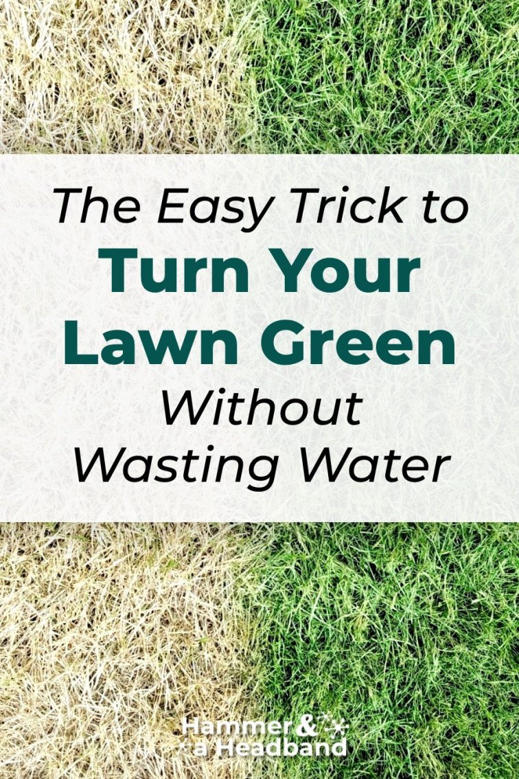 The easy trick to turn your lawn green without wasting water