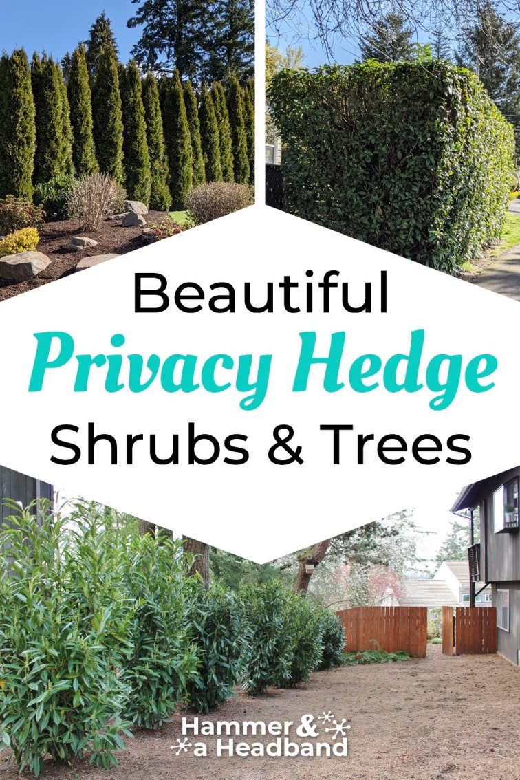 Beautiful privacy hedge shrubs and trees