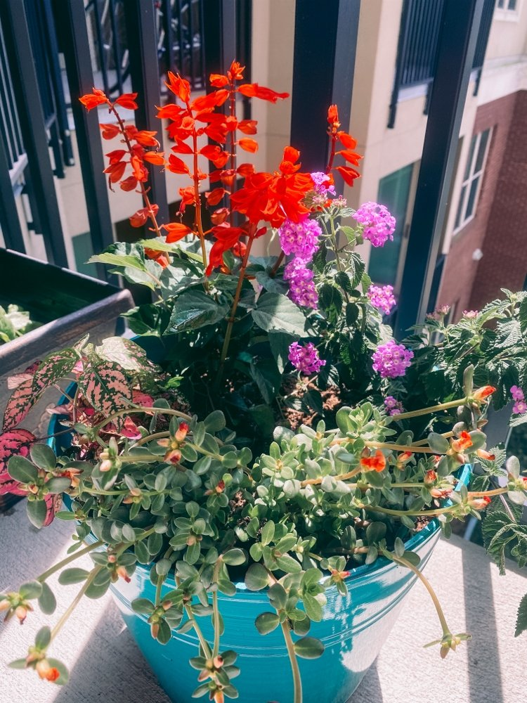 Colorful potted plant in balcony garden