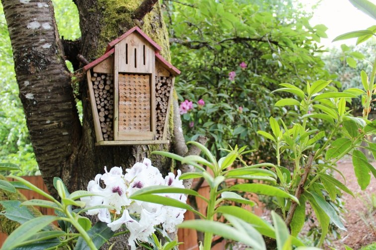 Bee and butterfly house in woodland garden