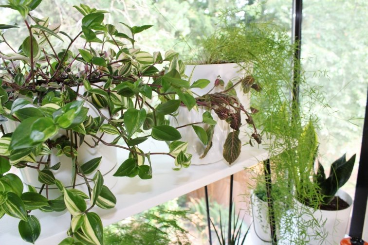 DIY plant stand shelf and cascading houseplants