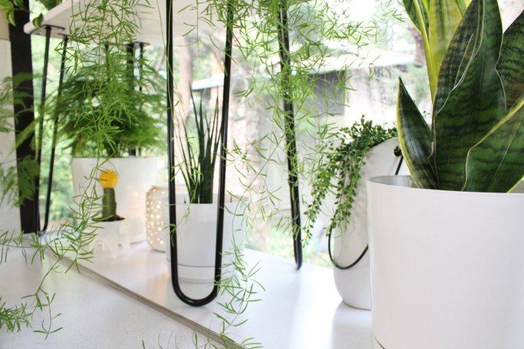 Houseplants in modern white planters in window