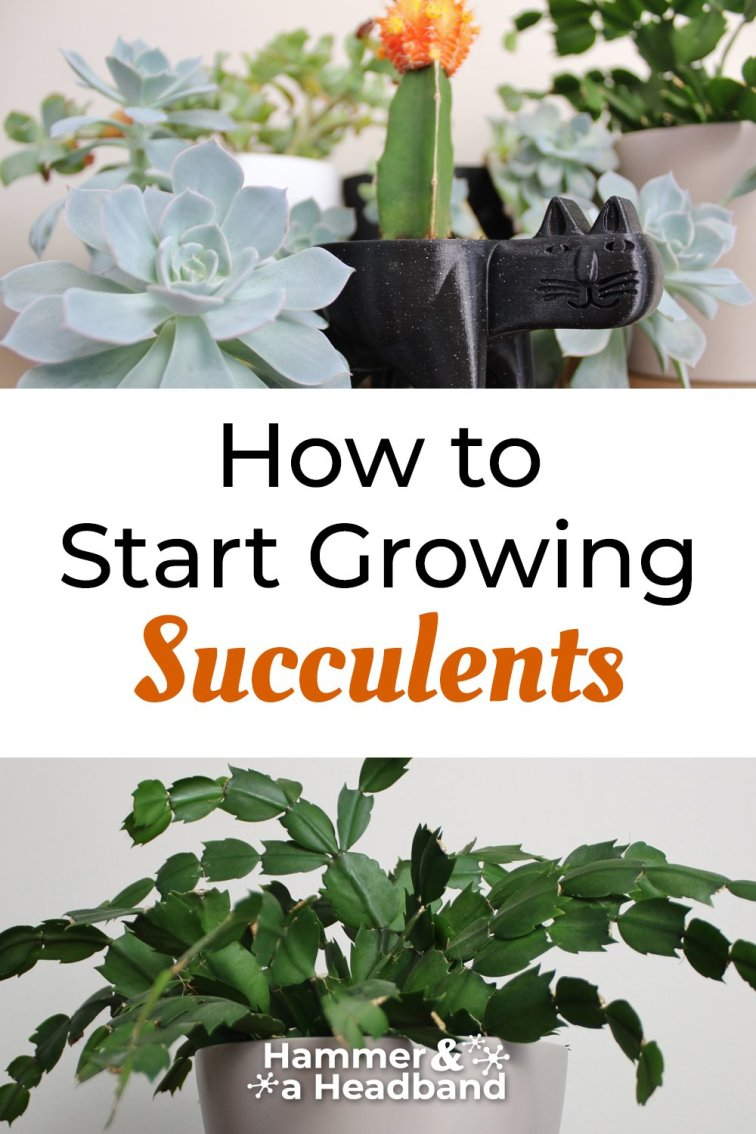 How to start growing succulents