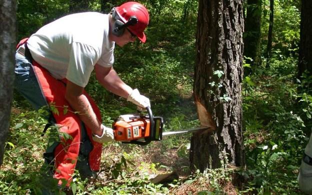 Waldarbeiter (Bild: Pixabay)