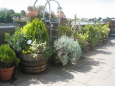 Planters, Lower Mall