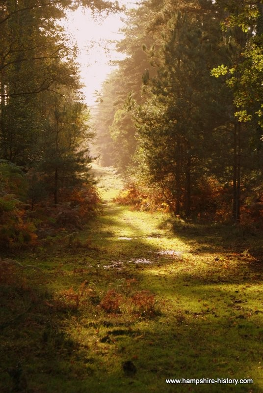 History of the New Forest walks