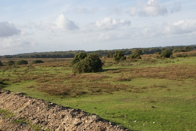 History of the New Forest