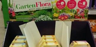 Feodora Frühlingstäfelchen - GartenFlora