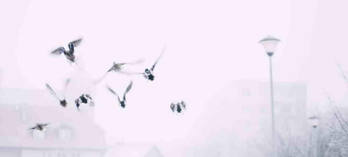 الخوف من الطيور (الأورنيثوفوبيا): كل ما تريد معرفته عن أسبابها وأعراضها وعلاجها