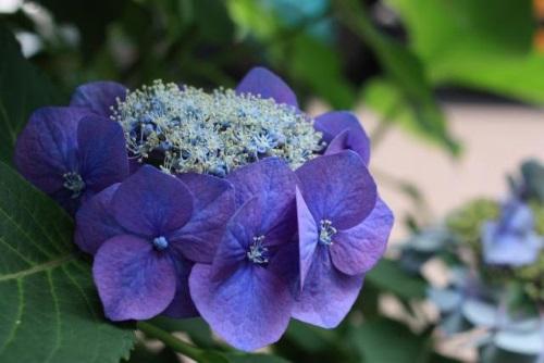 7月1日の誕生花の意味|花言葉辭典