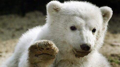 Jahrestag Fans trauern um Eisbr Knut  Aus aller Welt