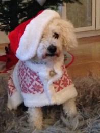 Juldräkt till hunden Dino