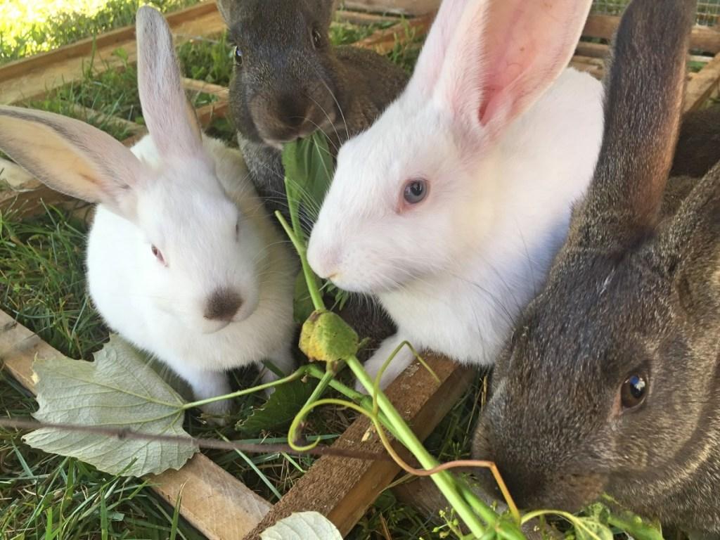 Rabbit - Hand Hewn Farm