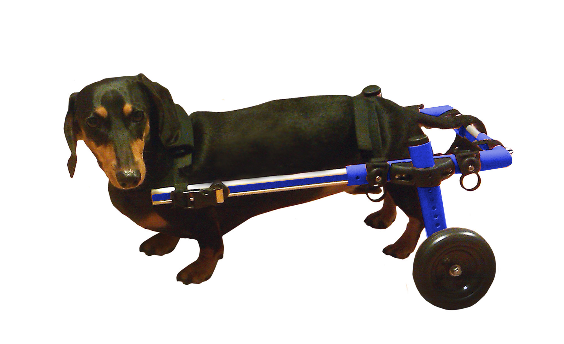 chairs for dogs outdoor chair and ottoman cushions walkin 39 wheels dog wheelchair ebay