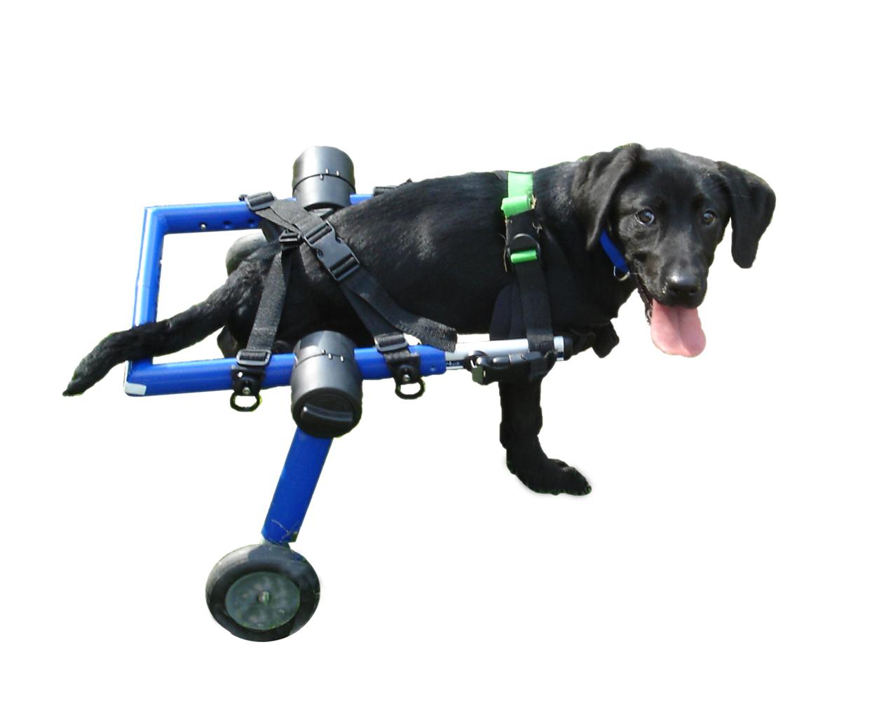 wheelchair dog futon chair mattress walkin wheels