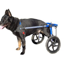 Wheel Chairs For Dogs Swing Chair Perth Walkin Wheels On Shoppinder