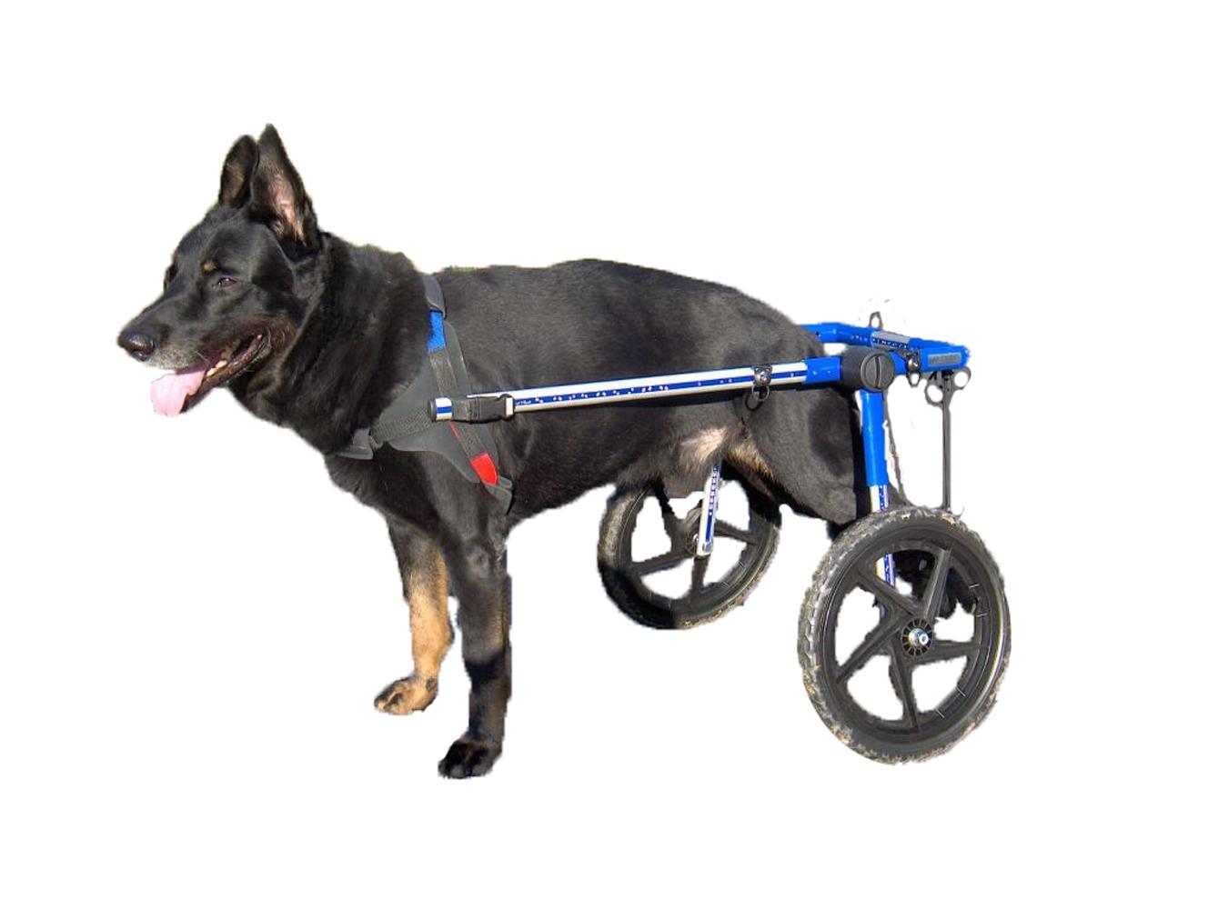 wheelchair dog eames bikini chair covers walkin wheels on shoppinder