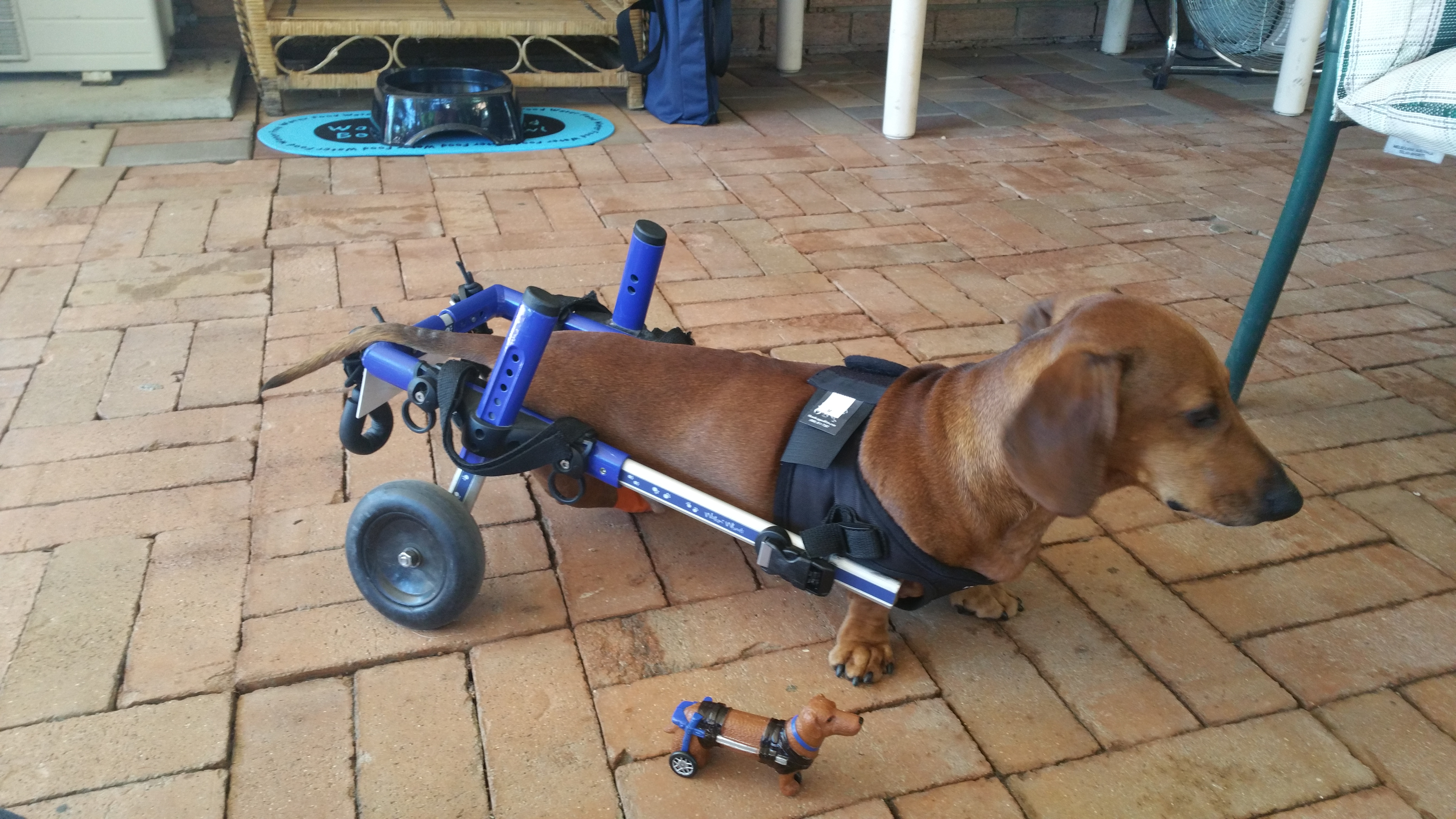 wheel chairs for dogs what is a geri chair wind up dog toy walkin 39 wheels wheelchair