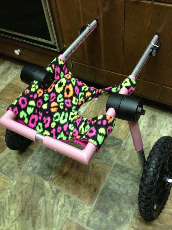 Do It Yourself Dog Wheelchair Carts - Year of Clean Water