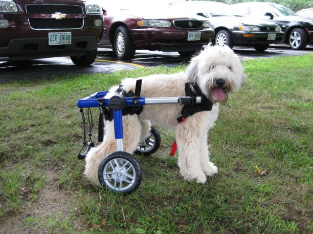 wheelchair dog chair covers malaysia find used pre owned wheelchairs handicappedpets can be purchased at useddogwheelchairs com