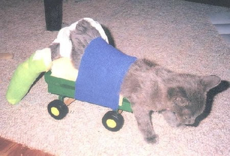 wheelchair for cats rocking chair nursery ikea cat home made cart mimosa in a homemade