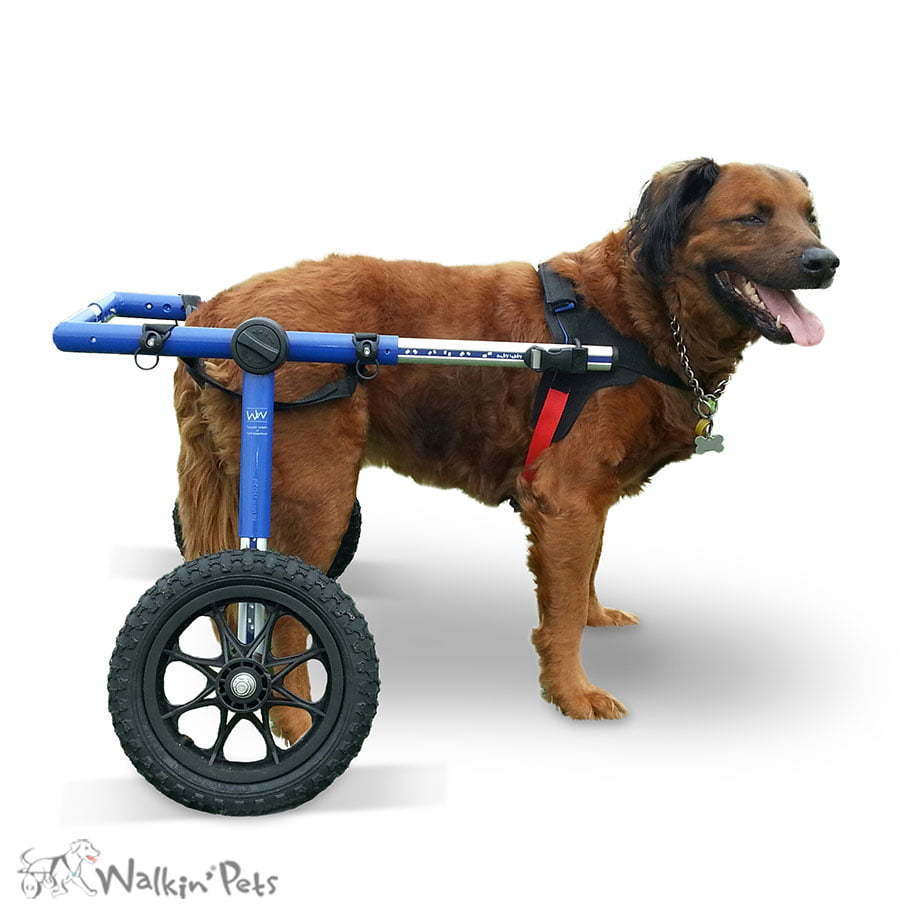 wheelchair dog wooden chair leg extenders walkin wheels large for handicapped pets