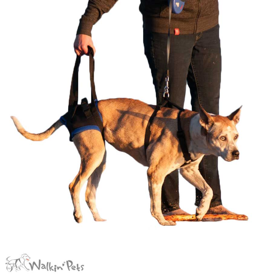 medium resolution of walkabout rear harness