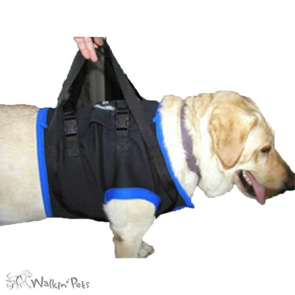 Front Harness Dogs And Cats Walk