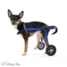 wheel chairs for dogs best nursing chair rear dog wheelchair walkin wheels handicappedpets mini