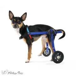 Wheelchair Dog Chair Covers And Sashes For Weddings Toy Breeds Cat Walkin Wheels Mini