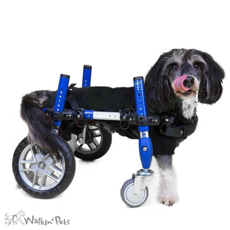 Dark Wheels Fully Supportive Pet Suspenders Suspenders Dog