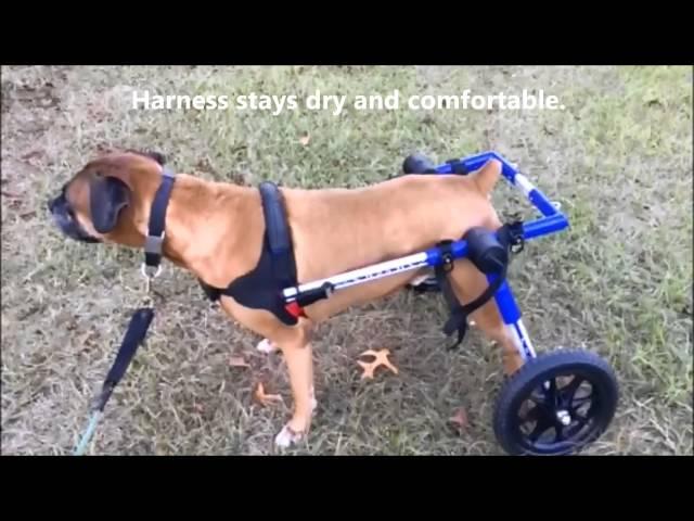 wheelchair dog chair for bad back medium pets 25 69 lbs walkin wheels bathroom break