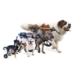 Wheel Chairs For Dogs Cool Hanging Walkin Wheels Dog Wheelchair Wheelchairs Of All Sizes