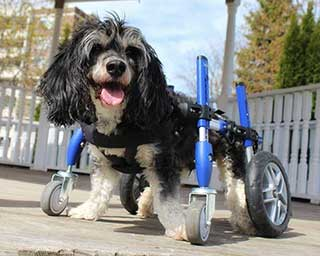 wheelchair dog outdoor composite rocking chairs walkin wheels wheelchairs for dogs of all sizes full support 4 wheel