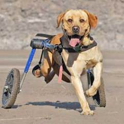 Wheelchair Dog Skyline Furniture Santa Maria Accent Chair Walkin Wheels Wheelchairs For Dogs Of All Sizes Rear