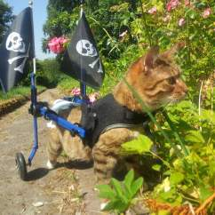 Wheelchair For Cats S Bent Rocking Chair Dog Toy Breeds Cat Walkin Wheels Mini Meatball In