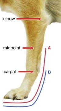Adjustable Splint Front Chart AB