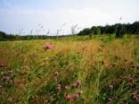 Auf der bunten Blumenwiese...
