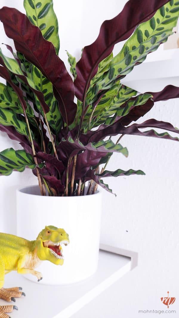 Zimmerpflanzen Ungiftig