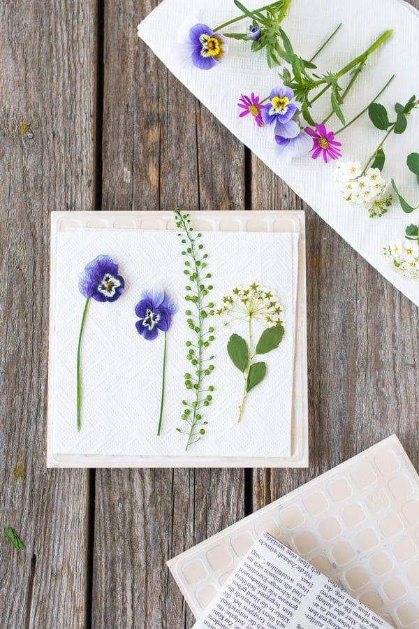 Blumen trocknen und pressen in 2 Minuten  HANDMADE Kultur