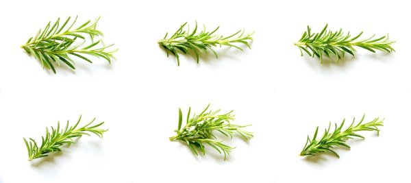 rosemary to make conditioner