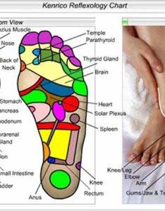 Source font reflexologyfootchart also foot reflexology charts  chart tips rh handreflexologycharts