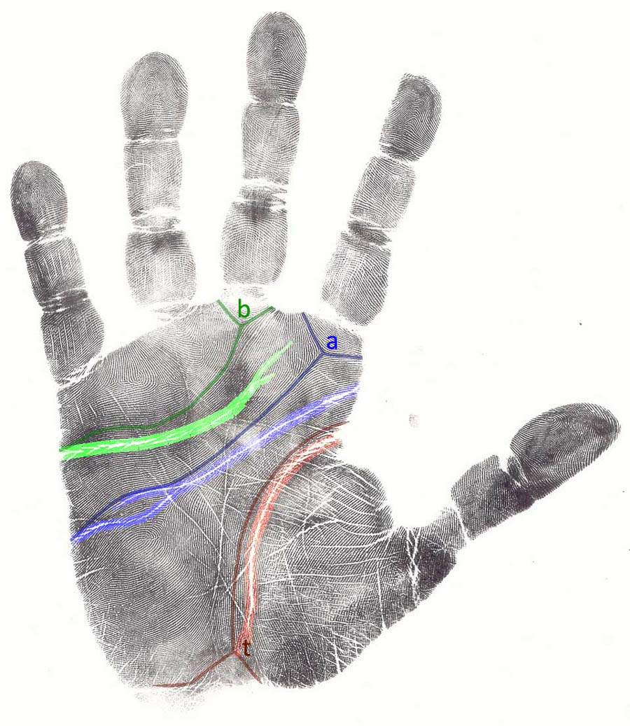 Palmistry: the major hand lines & palmar creases.