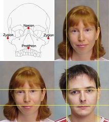 Sexually facial characteristics.