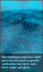 Fingerprints reveal identity, drugs & lifestyle.