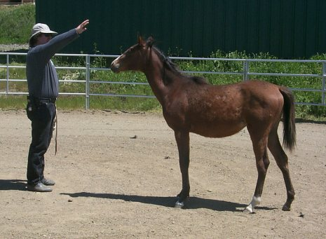 Image result for picture of horse trainer