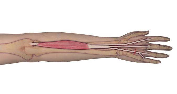 Muscle Test and Tendon Exam: Extensor Digitorum Communis ...