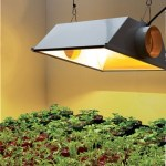 Indoor Plant Light Home Depot